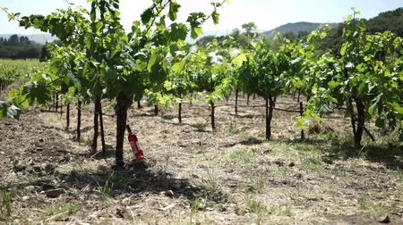 vinho : Vineyard with a wine bottle.