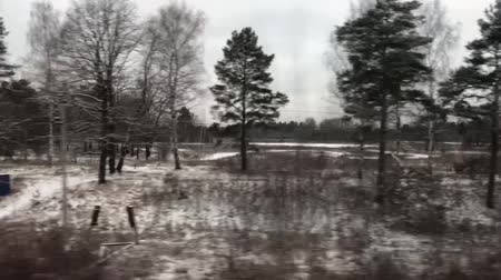 Forest View From Train Window Stock Footage