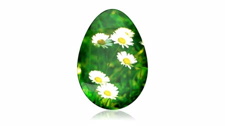 easter : Glass Easter Egg with Camomiles Stock Footage