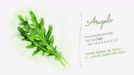 salata : Animated slide about the useful properties of Arugula Stok Video