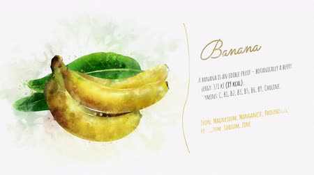 beautifully : A beautifully animated card with information about Banana Stock Footage