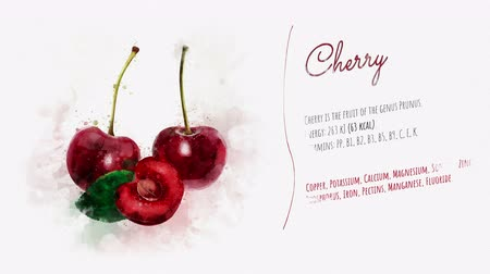kompot : A drawing of a Cherry on a paper texture