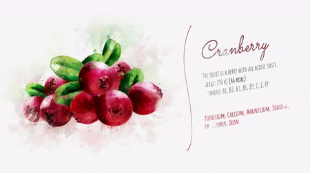 kızılcık : Brief information about Cranberry