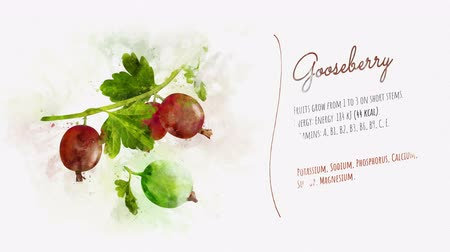 agrest : Ready animation about the benefits of Gooseberry