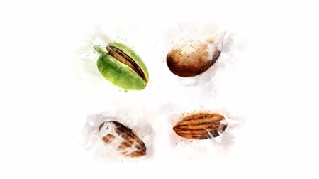 illustration and painting : Animation of drawing Almond and its parts Stock Footage