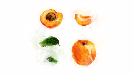 morele : Animation of Apricot with spreading ink Wideo