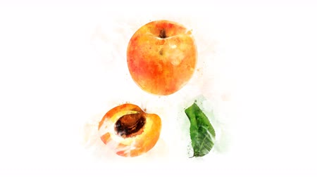 morele : Animated appearance of watercolor Apricot on the alpha channel Wideo