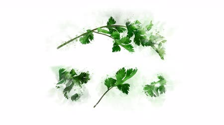 koriander : Coriander animation for healthy eating
