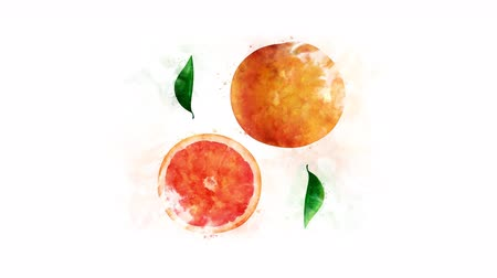 grejpfrut : Grapefruit and its parts on the alpha channel