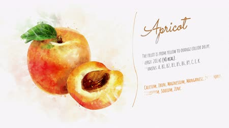 morele : The card about Apricot and its description