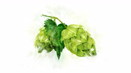 bira fabrikası : Animated image of hops on the alpha channel