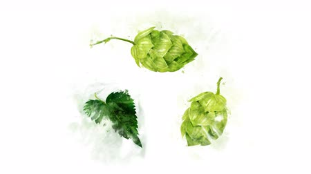 bira fabrikası : Several hops animations on a transparent background