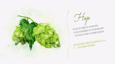 bira fabrikası : Presentation card of hops Stok Video