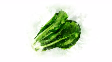 salata : Animation of a lettuce salad Image Stok Video