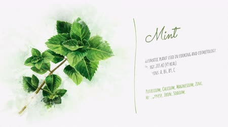 mancha : Ready animation about the benefits of Mint
