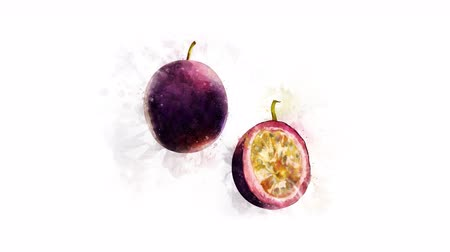 dilimleri : Animation of drawing Passionfruit and its parts