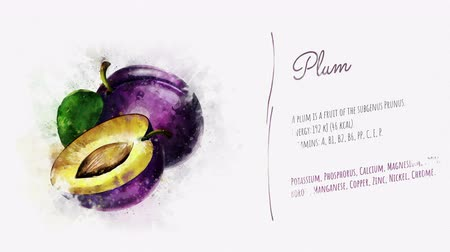 kompot : Animated card of Plum with a list of its useful properties Wideo