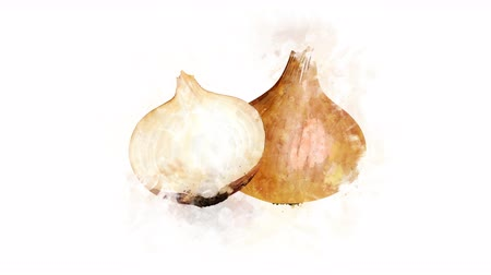 акварель : Onion on a transparent background