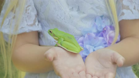 kıymetli : Pre teen caucasian girl holding a white lipped tree frog in her hands Stok Video