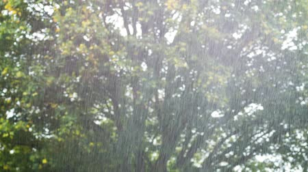 torrential rain : A rain shower