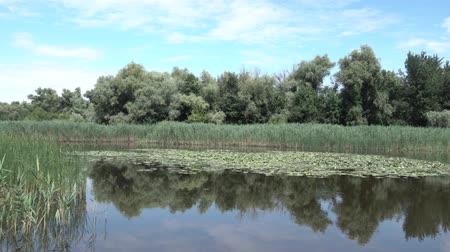 sazlık : Picturesque panorama of a wild lake with water lilies in sunny day Stok Video