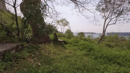 handheld shot : Handheld footage approaching a bench under a tree on a hill overseeing Navarino bay - Greece Stock Footage