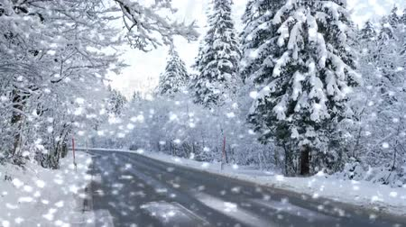 Strada in inverno nella foresta con neve - Video