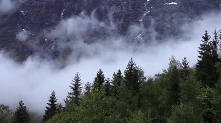 esőerdő : Mountain forest Fog Norway Stock mozgókép