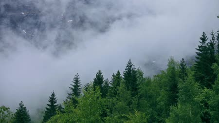 fog : Mountain forest Fog Norway Stock Footage