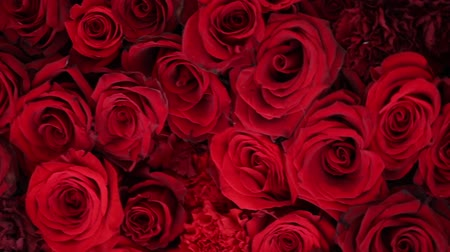 dozen : Natural red roses background closeup Stock Footage