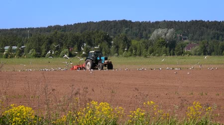 akkerland : Agricultural work on a tractor farmer sows grain. Hungry birds are flying behind the tractor, and eat grain from the arable land.