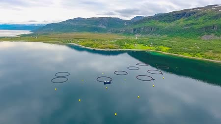 mořská voda : Aerial footage Farm salmon fishing in Norway