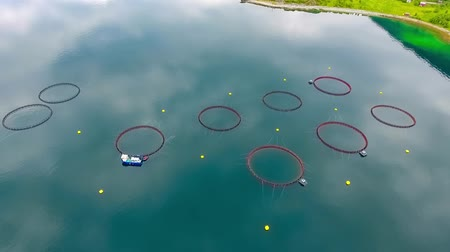 norvégia : Aerial footage Farm salmon fishing in Norway