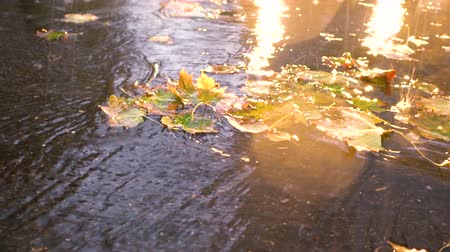 alcatrão : Autumn rain in bad weather, rain drops on the surface of the puddle with fallen leaves. Stock Footage