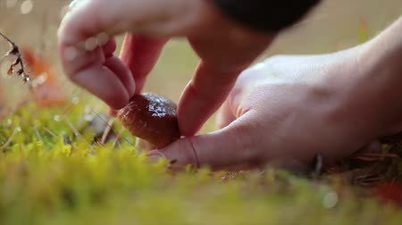 fungos : Man cuts a mushroom with a knife in the autumn forest. Stock Footage