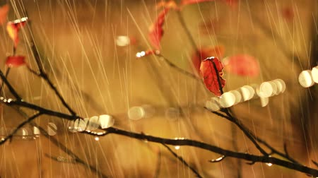 donder : Herfst regen close-up