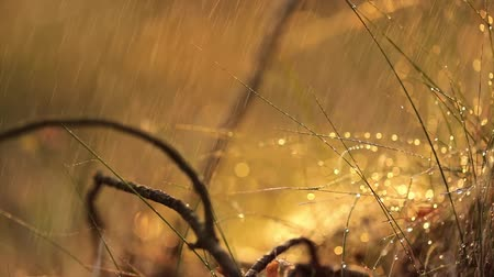 agro : Abstract Blurred background of summer rain in Sunny forest close-up. Nature background.