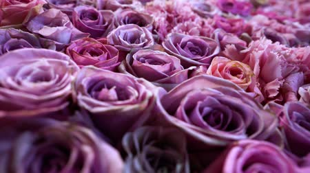 darling : Natural roses background closeup Stock Footage