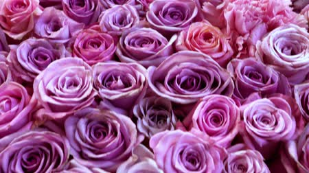 dozen : Natural roses background closeup Stock Footage
