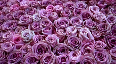церемония : Natural roses background closeup Стоковые видеозаписи