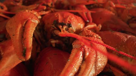 shellfish dishes : Boiled crayfish close-up