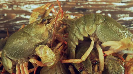 kerevit : Live crayfish on a wooden table close-up