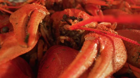 kerevit : Boiled crayfish close-up