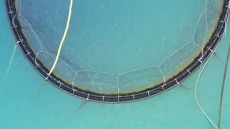 Норвегия : Aerial footage Farm salmon fishing in Norway. Norway is the biggest producer of farmed salmon in the world, with more than one million tonnes produced each year. Стоковые видеозаписи