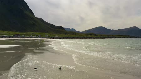 известное место : Panorama Beach Lofoten islands is an archipelago in the county of Nordland, Norway. Is known for a distinctive scenery with dramatic mountains and peaks, open sea and sheltered bays, beaches Стоковые видеозаписи