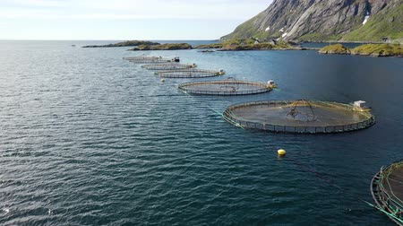 mořská voda : Aerial footage Farm salmon fishing in Norway. Norway is the biggest producer of farmed salmon in the world, with more than one million tonnes produced each year. Dostupné videozáznamy