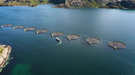 以上 : Aerial footage Farm salmon fishing in Norway. Norway is the biggest producer of farmed salmon in the world, with more than one million tonnes produced each year. 動画素材