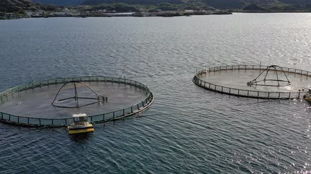 noors : Aerial footage Farm salmon fishing in Norway. Norway is the biggest producer of farmed salmon in the world, with more than one million tonnes produced each year. Stockvideo