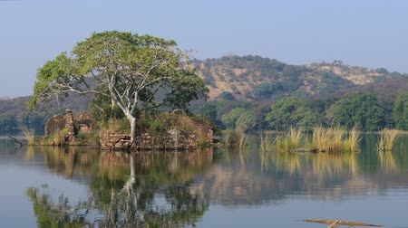 monção : Jungle India. Ranthambore National Park Rajasthan India. Beautiful nature of India Vídeos