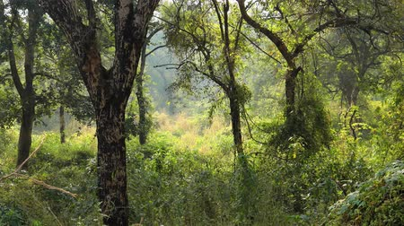 тропики : Jungle India. Ranthambore National Park Rajasthan India. Beautiful nature of India Стоковые видеозаписи